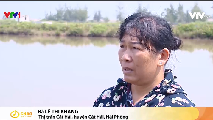 Những 'nông dân không đất' ở Cát Hải phản ánh với Đài truyền hình Việt Nam (VTV)