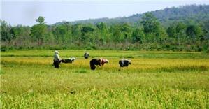 Đất trồng lúa có được chuyển sang đất ở không?
