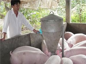 Chăn nuôi nhỏ có phải đăng ký kinh doanh không?