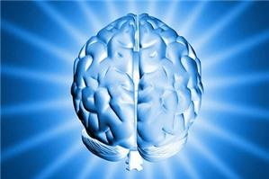 Quyền sở hữu trí tuệ bao gồm các đối tượng nào?