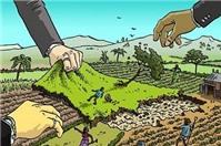 Cây trồng trên đất giáp ranh thì xử lý như thế nào?