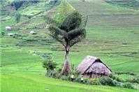 Tranh chấp về hợp đồng mua bán đất