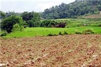 Chuyển đổi mục đích sử dụng đất từ đất trồng cây lâu năm sang đất ở