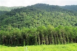 Tư vấn sử dụng đất trong khu vực có rừng phòng hộ