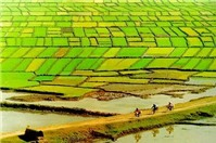 Đất ruộng nằm dưới đường điện cao áp, có được bồi thường không?