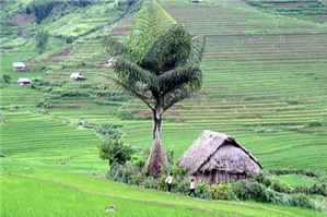 Đòi lại đất cho hộ gia đình khác mượn để trồng cây