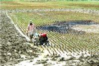 Luật sư tư vấn tranh chấp đất nông nghiệp