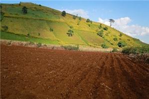 Chuyển mục đích sử dụng đất trồng lúa sang đất trồng cây lâu năm