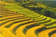 Hỏi về thủ tục tách thửa đất, vẽ sơ đồ đất đai ?