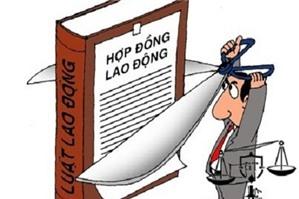 Luật sư tư vấn: không có kinh nghiệm công ty không ký kết hợp đồng lao động