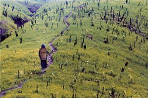 Diện tích tối thiểu được tách thửa đất tại Long An?