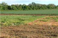 Thời hạn sử dụng đất công ích là bao lâu?