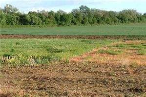 Thủ tục cấp sổ đỏ và chuyển mục đích sử dụng đất với đất ao gần khu dân cư