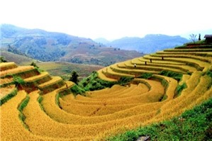 Điều kiện, thủ tục thuê đất nông nghiệp, chuyển đổi mục đích sử dụng đất nông nghiệp được thực hiện như thế nào?
