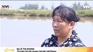 Thu hồi đất cho Dự án Deep C III (Cát Hải): Người dân có đủ căn cứ pháp lý để yêu cầu bồi thường khi Nhà nước thu hồi đất