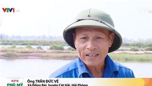 Thu hồi đất cho Dự án Deep C III (Cát Hải): Không có Hợp đồng thuê đất, chỉ có Hợp đồng thuê mặt nước!